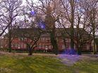 Park des Schlosses vor Husum mit Krokussen