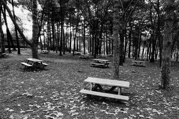 Park Emirgan Korusu