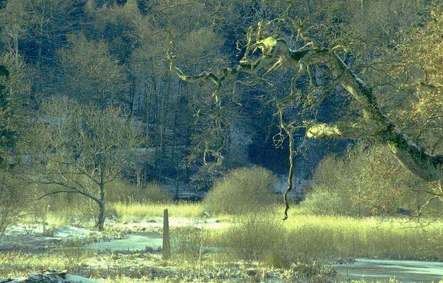 Park im Winter mit Eichenast