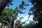 Park in Ponta Delgada