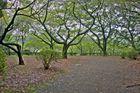 Park in Tokyo (2)