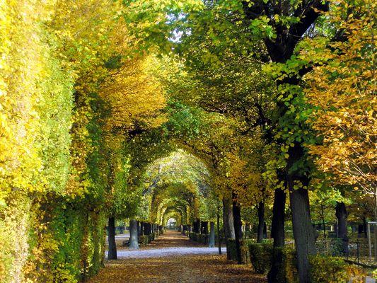 Park in Wien Schönbrunn...