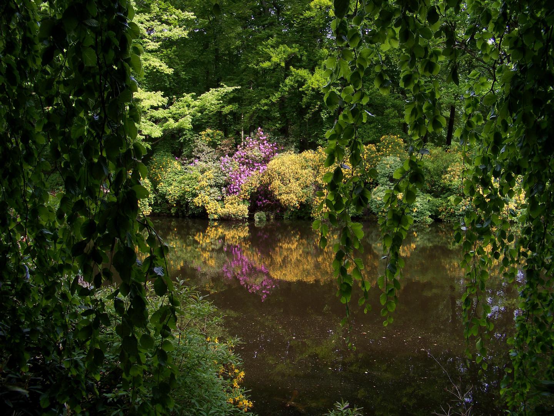 Park Kromlau VII