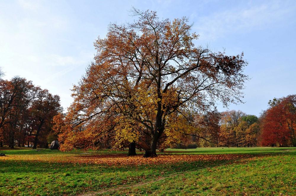 Park Schloß Glienicke / Berlin 08.11.09