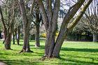 Park Weingarten Freiburg