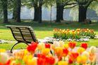 Parkbank in mitten von Tulpenbeeten.