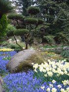 Parkbaum in schöner Umgebung
