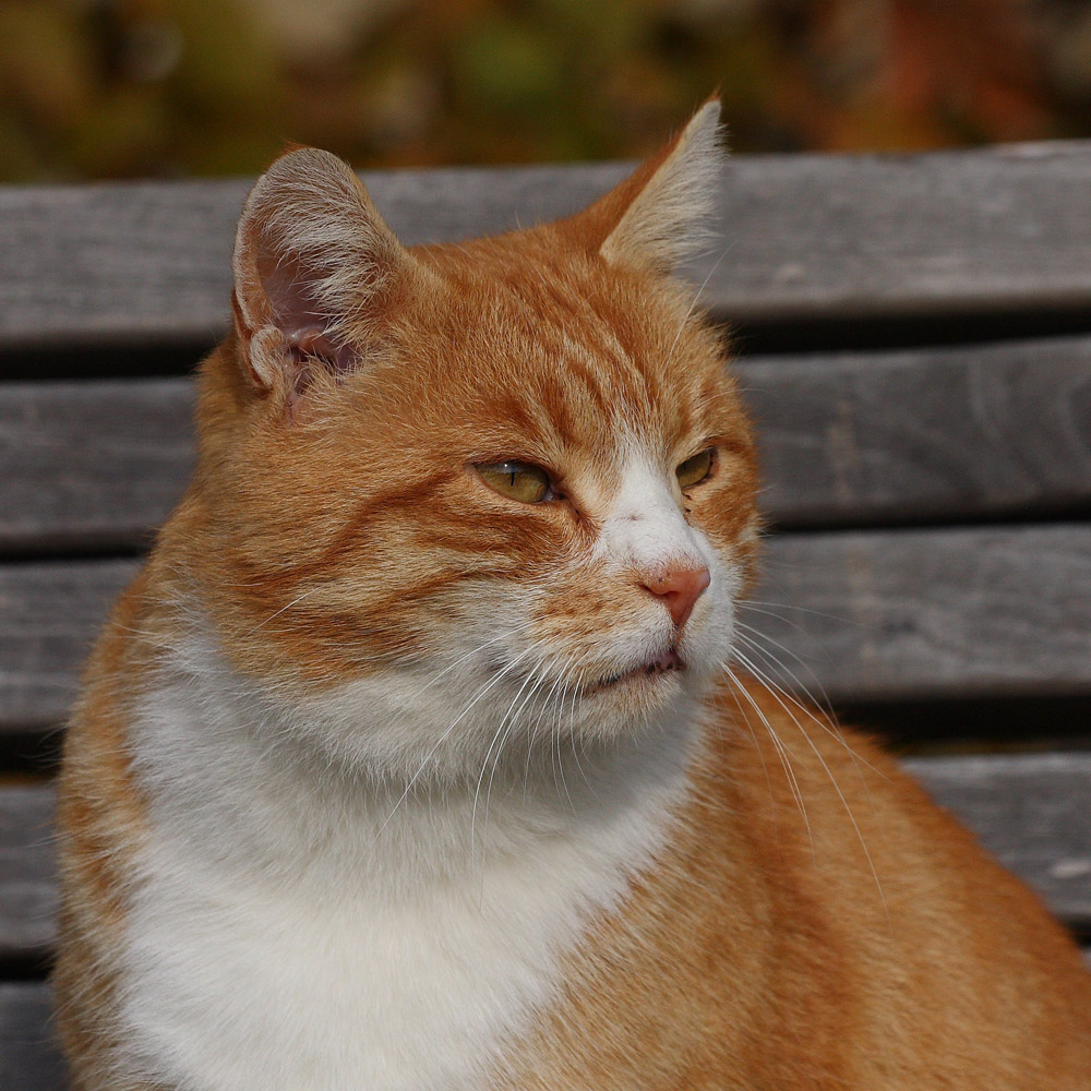 Parkkatzenportrait