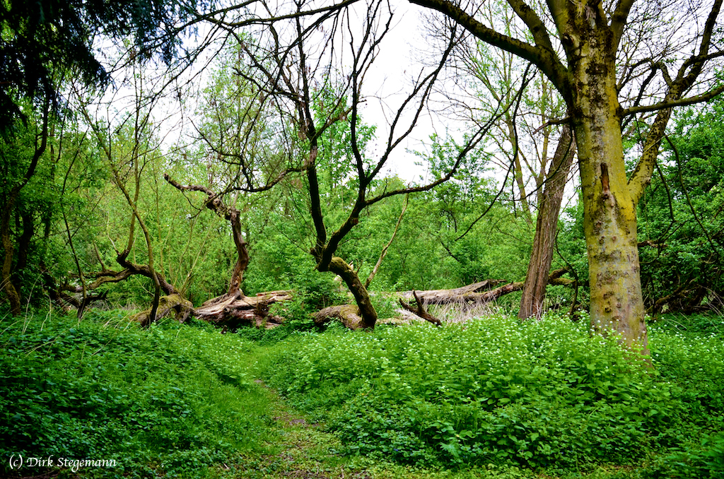 Parklandschaft an der Berkel in Billerbeck - Münsterland.