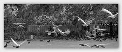 Parkleben mit Tauben