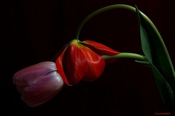 Parla con i fiori: Il bacio sul collo