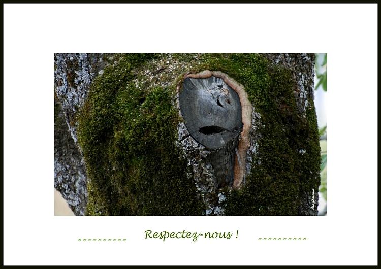 Parole aux arbres