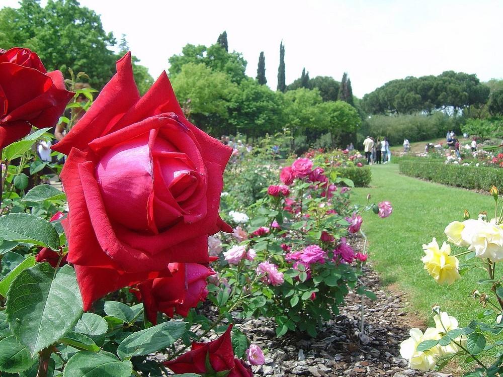 Parque de las rosas barcelona imagen foto plantas for Plantas ornamentales para parques