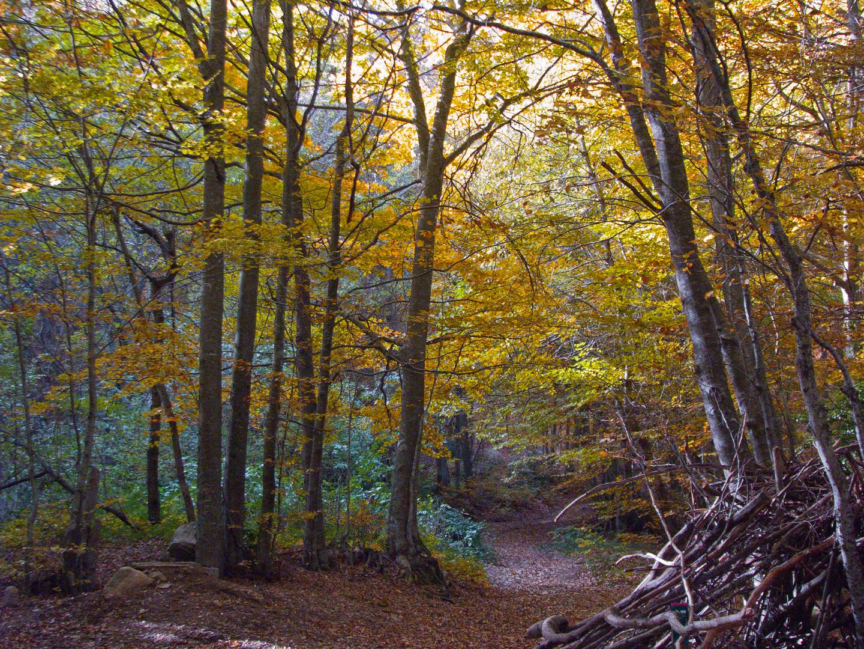 Parque del Montseny - Cataluña - España