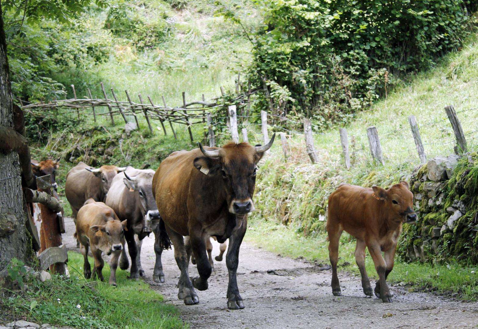 Parque Nacional de Redes, Asturias