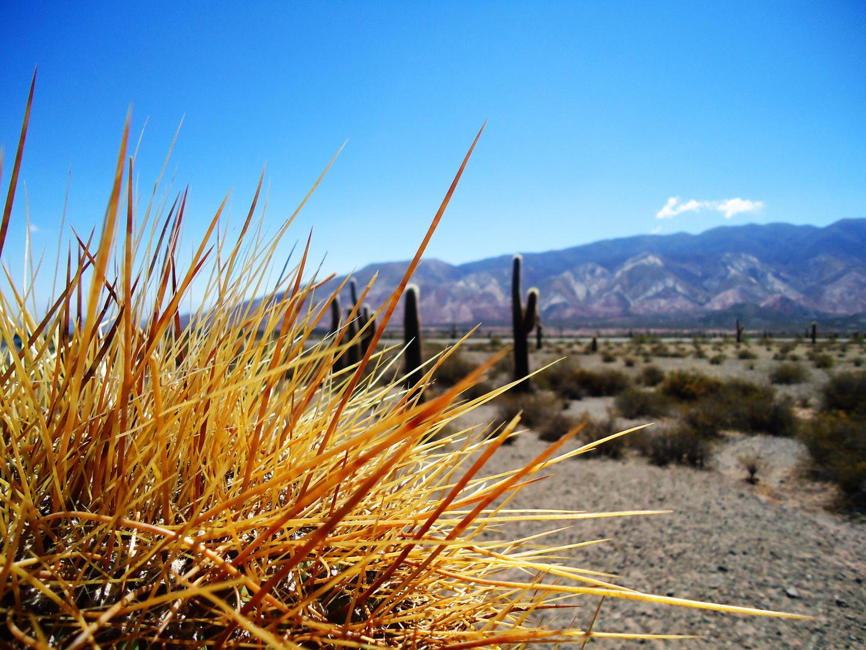 Parque Nacional LOS CARDONES - Salta - Argentina