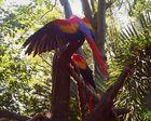 parrots at disney land
