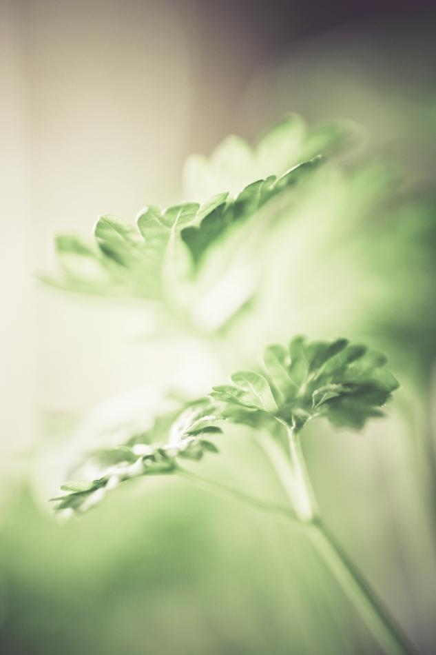 .parsley.