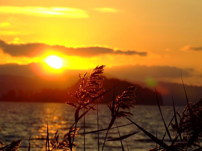 Particolari al tramonto