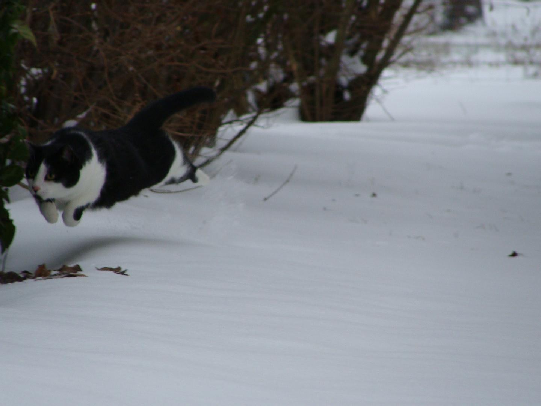 Partie de chasse dans la neige