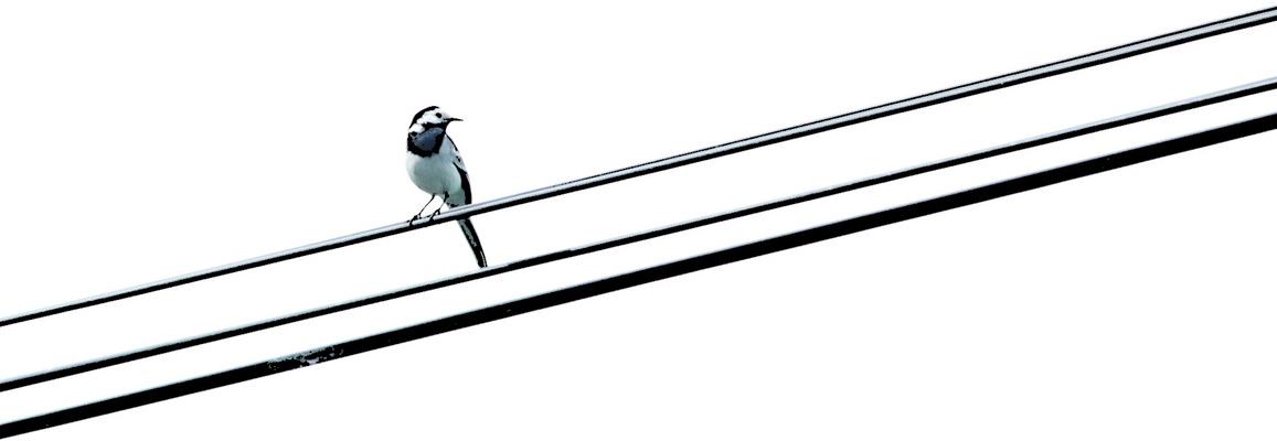 partition pour chant d'oiseaux