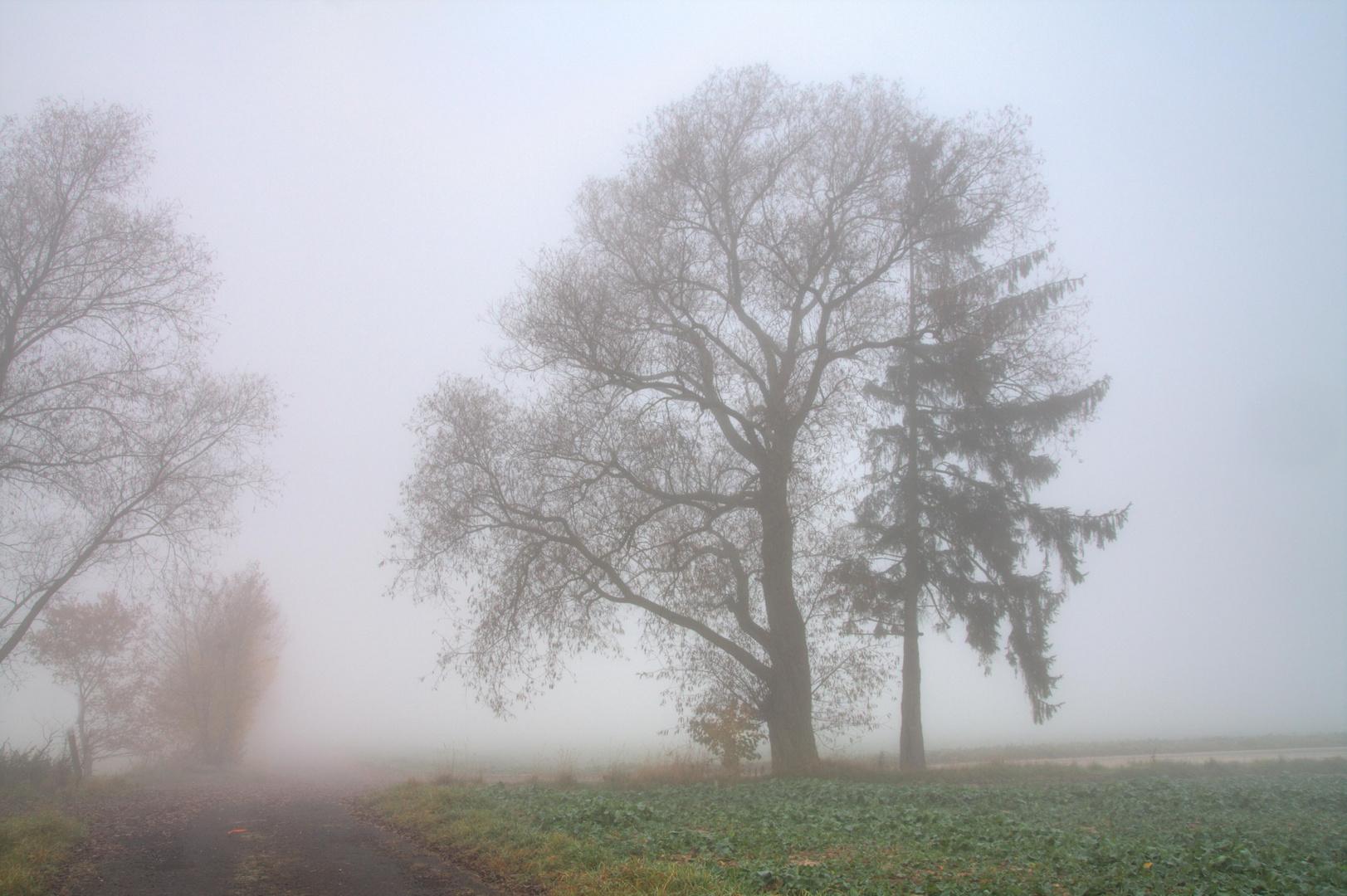 Partnerbaum im Nebel