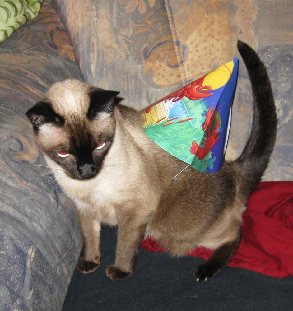 Partykatze Fendi