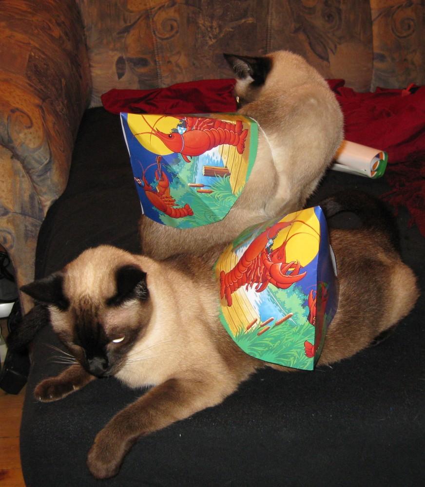 Partykatzen Gucci & Fendi