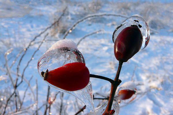 Parure hivernal