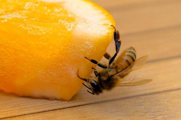 Pas folle l'abeille