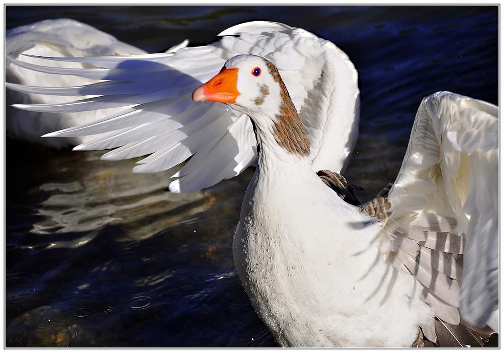 Pas moi pour le foie gras!!!!