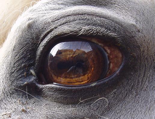 Pascha's Blick