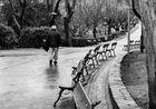 Paseando despues de la lluvia