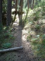 paseando por el bosque