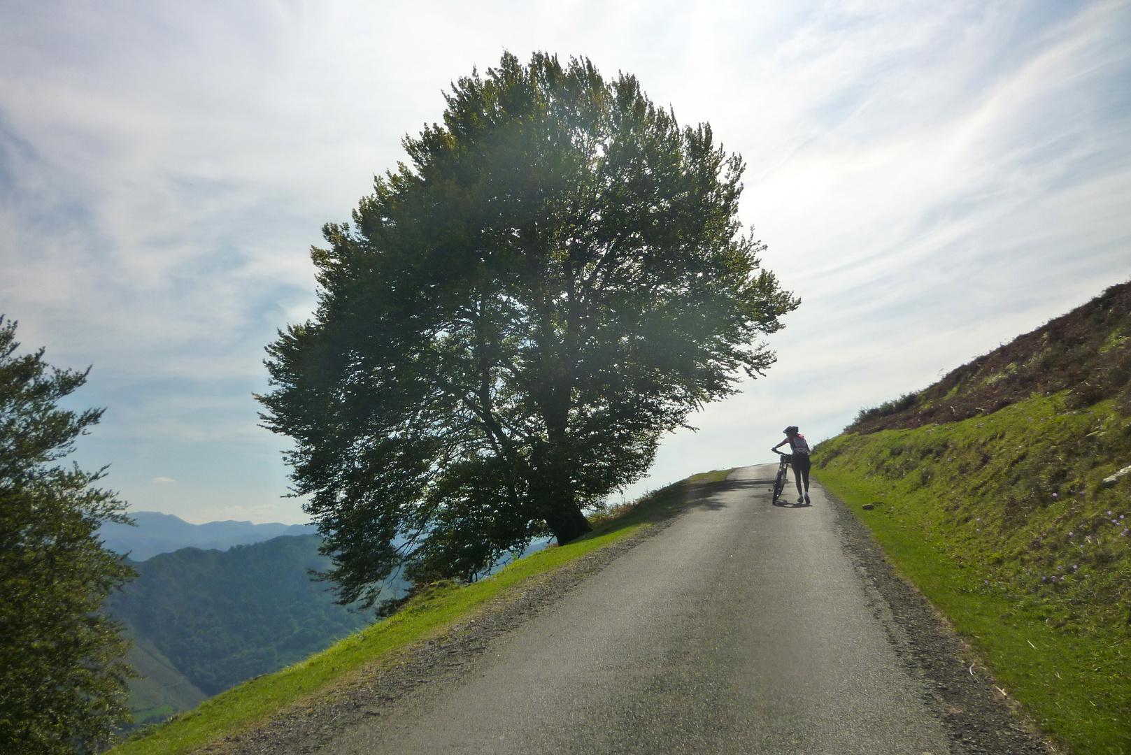 Paseando por los Pirineos