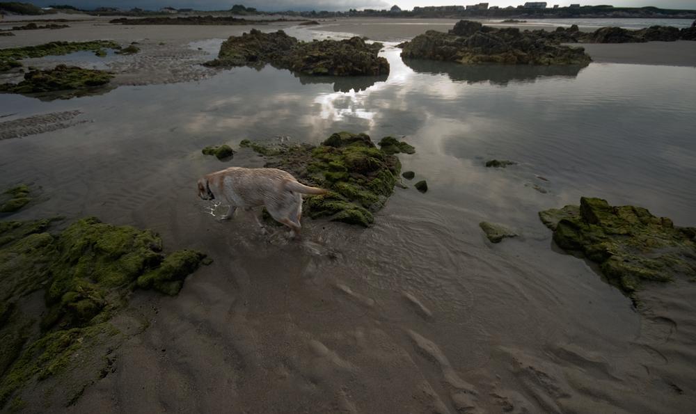 Paseo del perro(II)