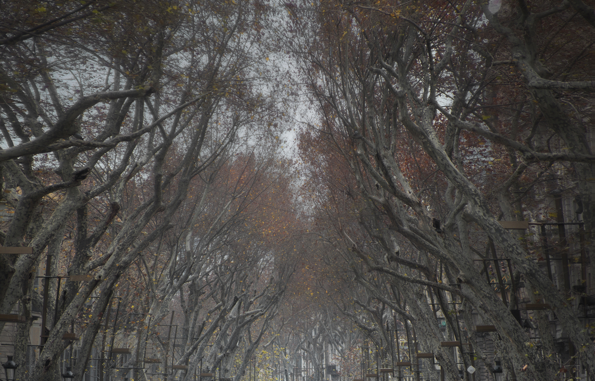 """Paseo en otoño"" lX...detalle2"