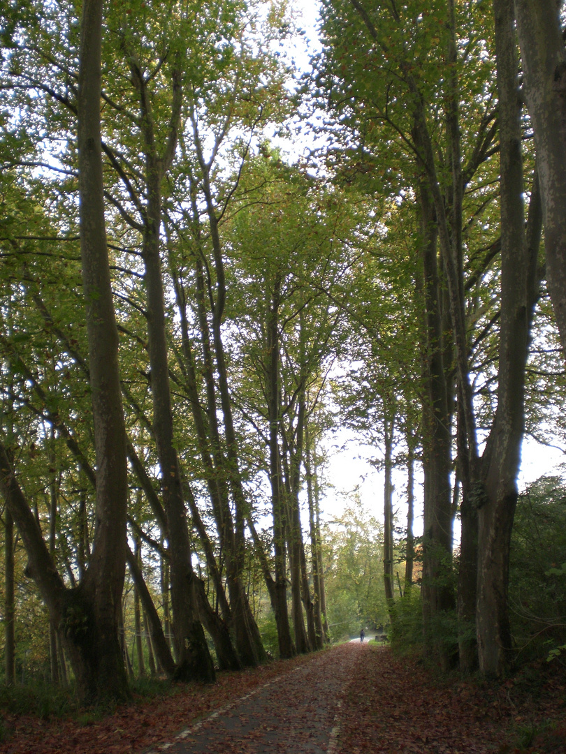 Paseo entre los árboles