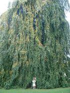 paseo por el parque-arbol grande