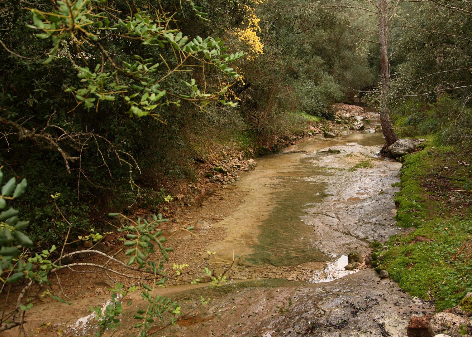 Paseo por el torrente