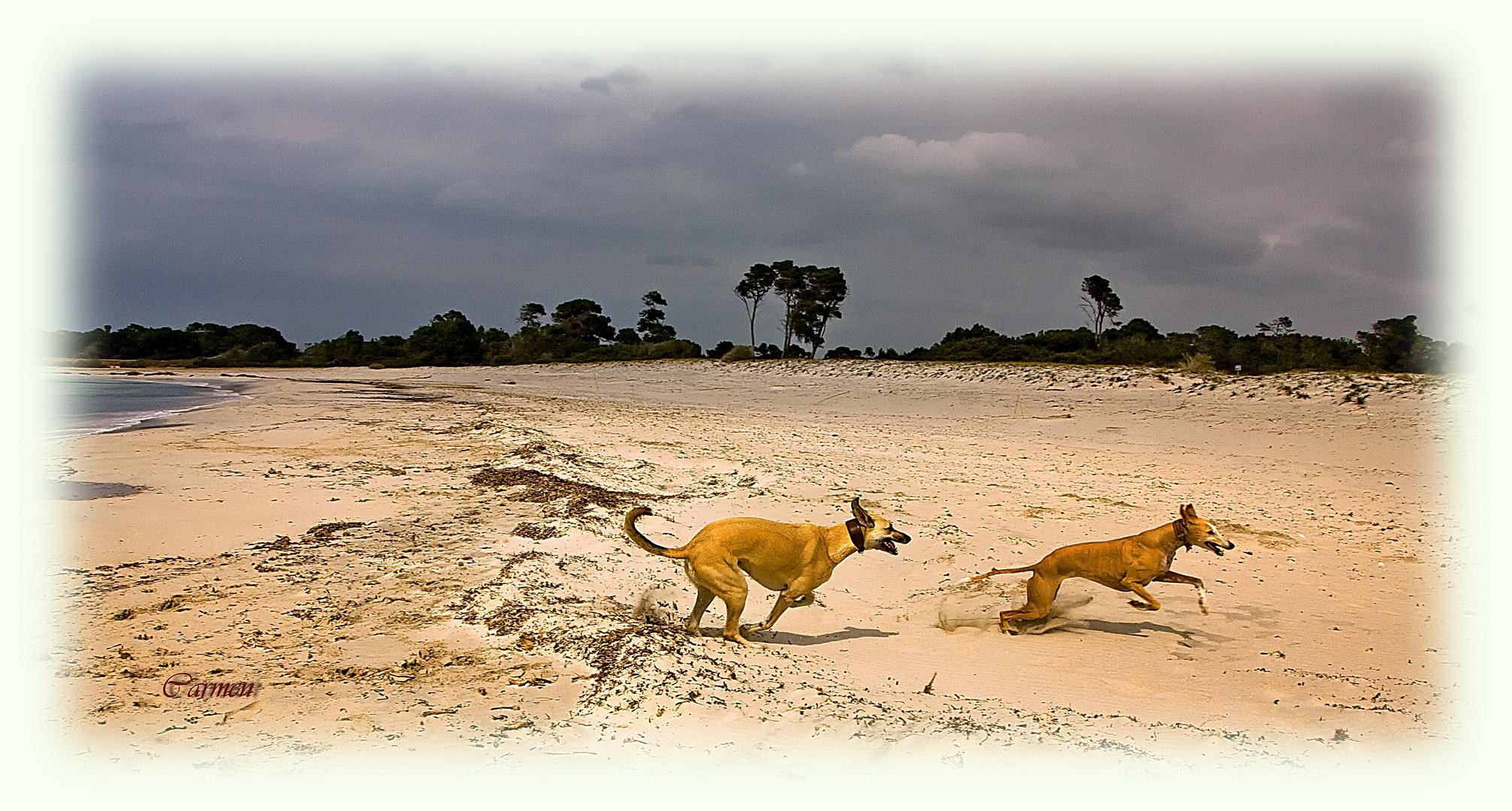 Paseo por la playa (DEDICADA A JUAN DE DIOS)