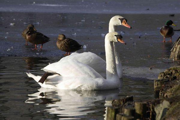 Pass auf, die nächste Ente spritze ich nass :-)