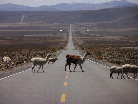 passage animalier