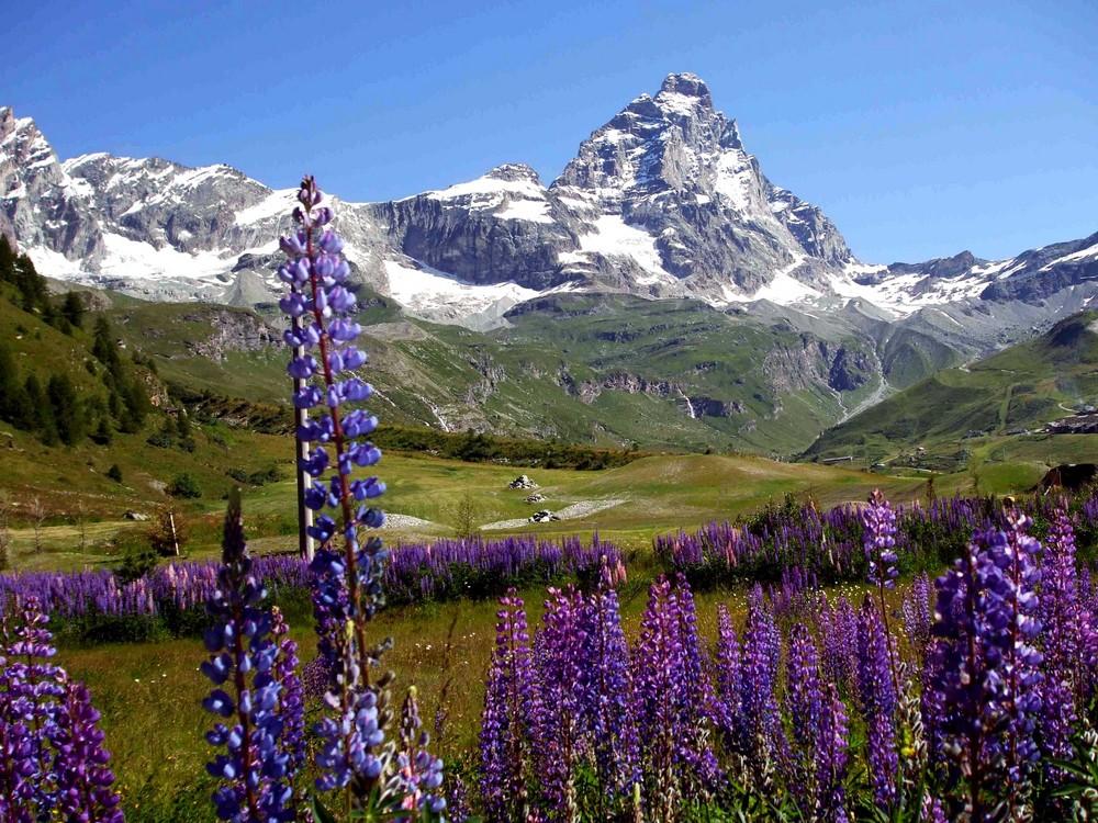 Passeggiando in montagna foto immagini paesaggi natura - Giardini di montagna foto ...