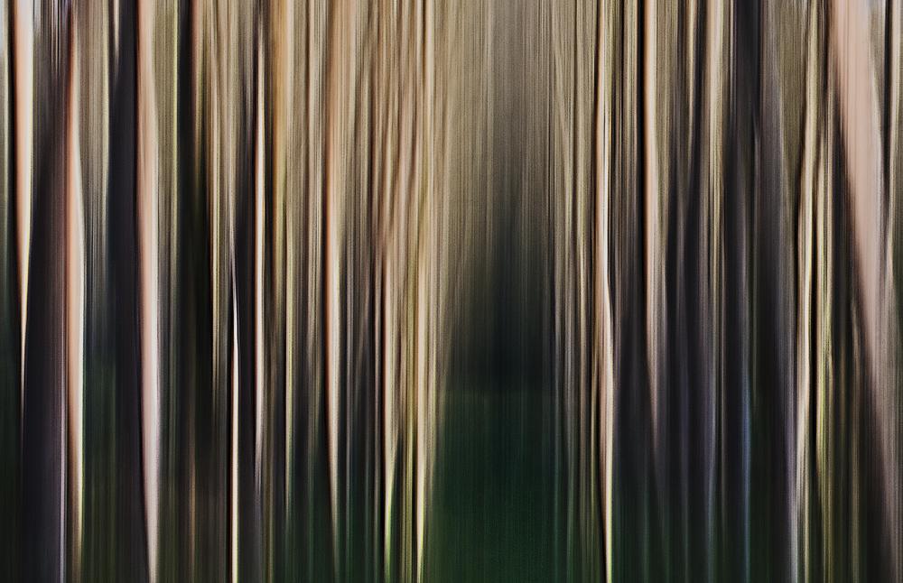 passeggiando nel bosco 3