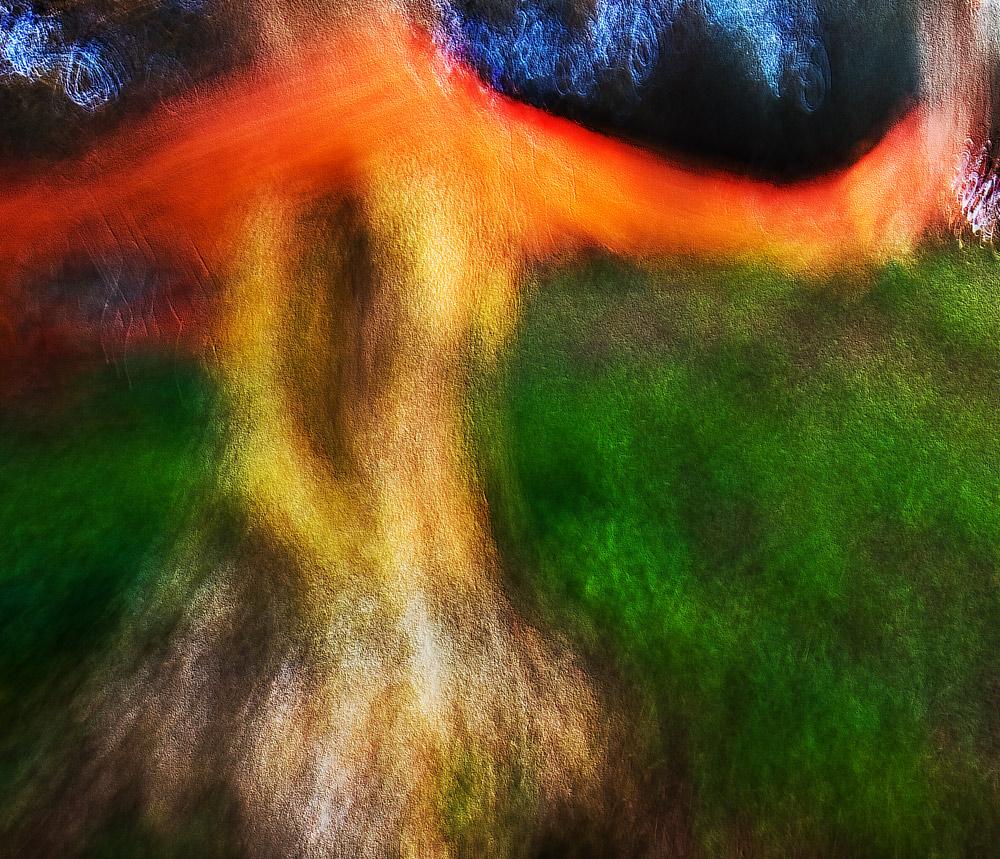 passeggiando nel bosco