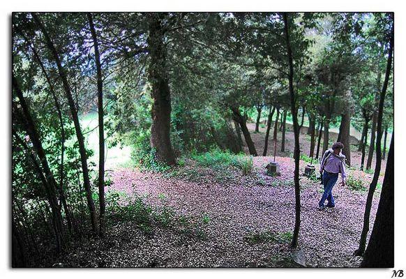 Passeggiate nei boschi fotografici