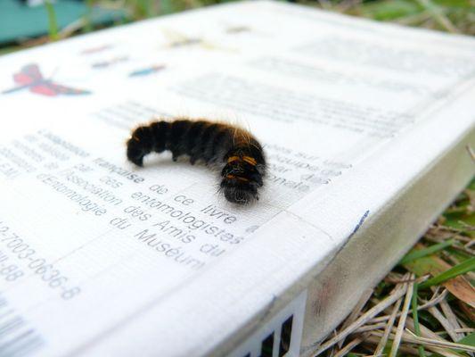 Passion Entomologique
