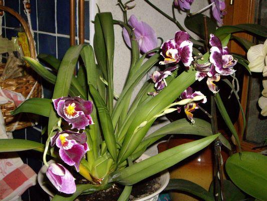 Passion ....Orchidées!!!!!!