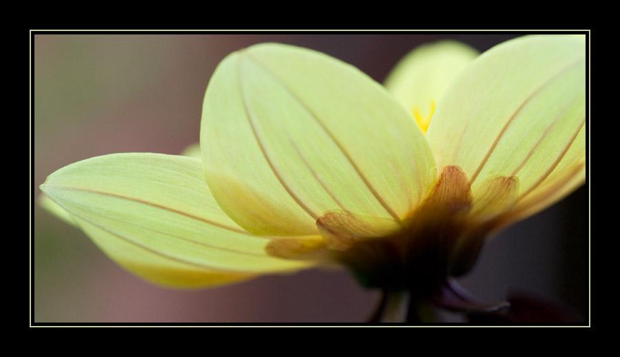 pastel colors...